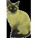 Naturalna obroża przeciwko pchłom i kleszczom dla kota