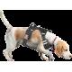 Szelki bezuciskowe dla psa